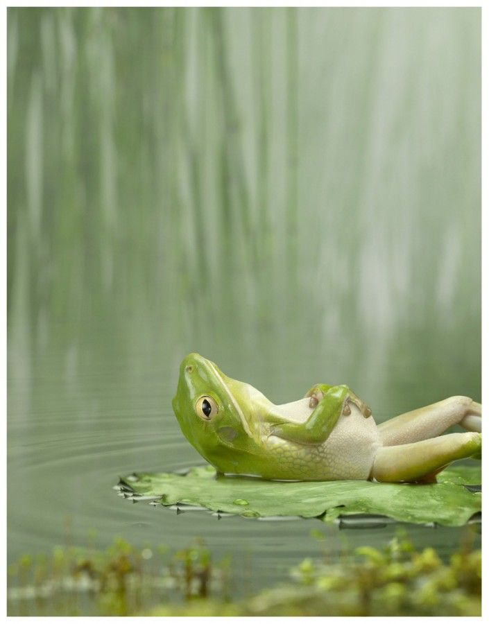 """Dramatic Frog"" 