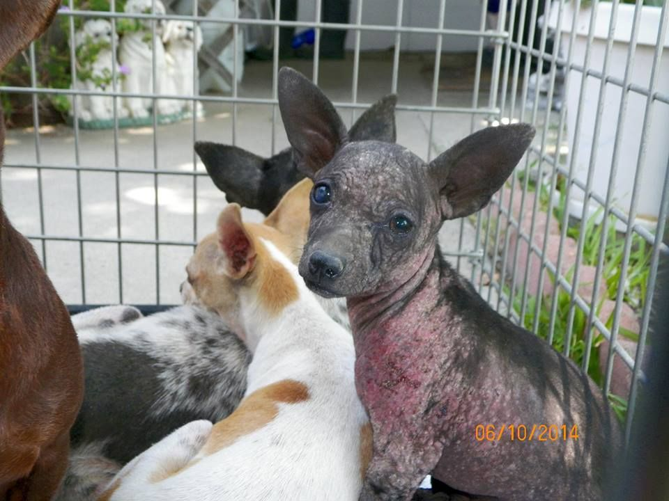 Pin by Cindy Weaver on PLEASE!! Help Angels Who NEED to be