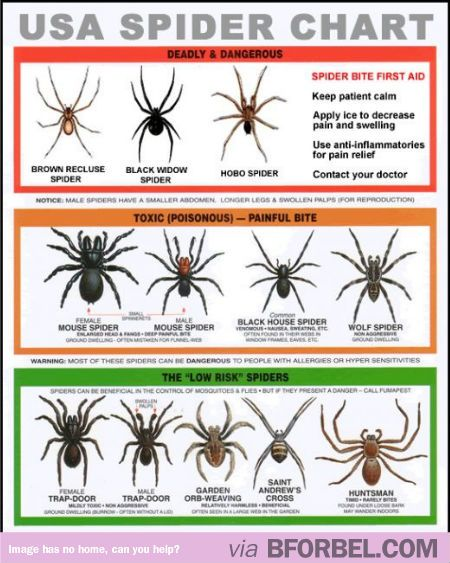 usa spider chart that tells you which are the dangerous spiders rh pinterest com