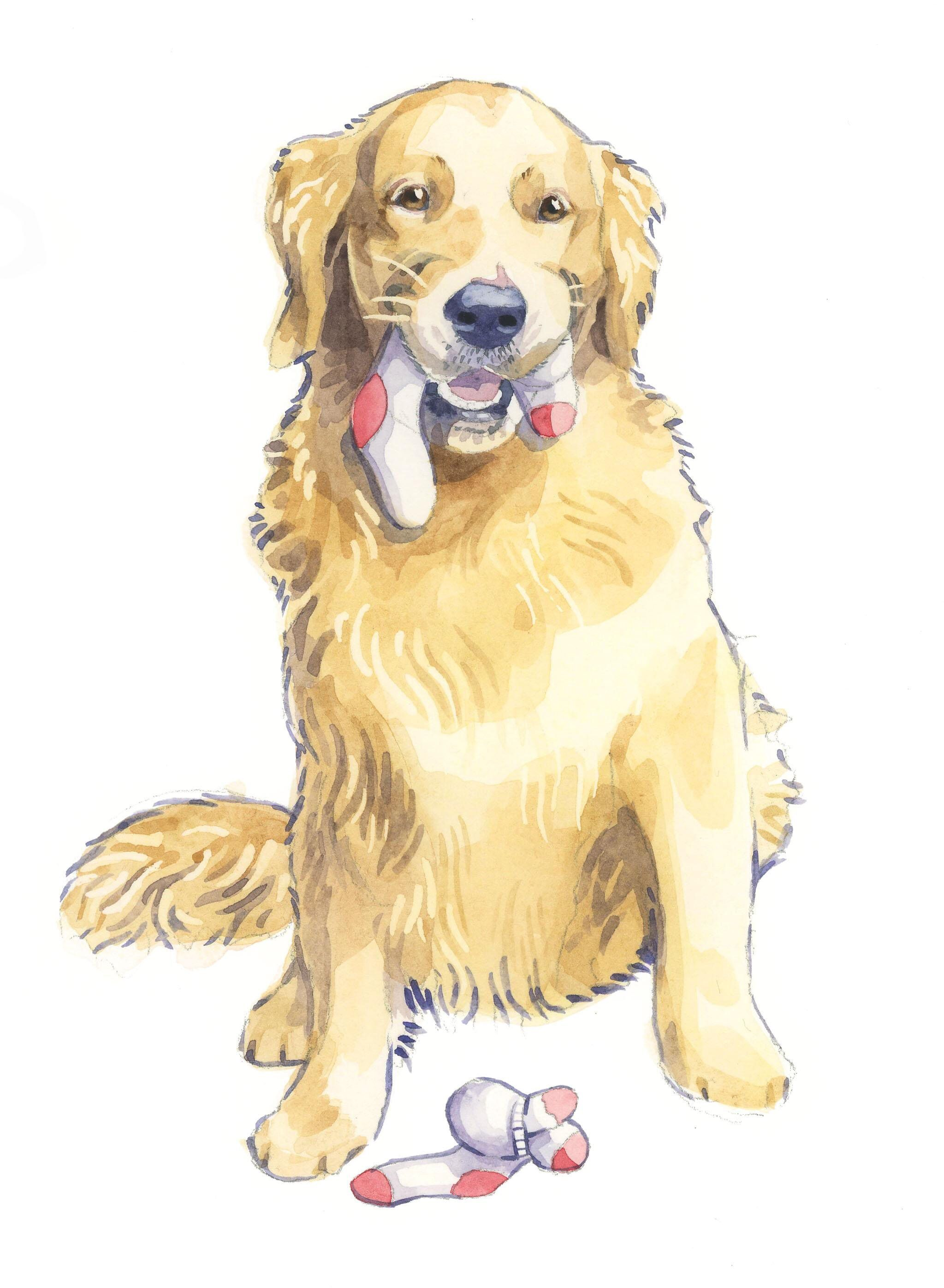 Golden Retriever Drawing Image By K Lowe On Dogs Golden