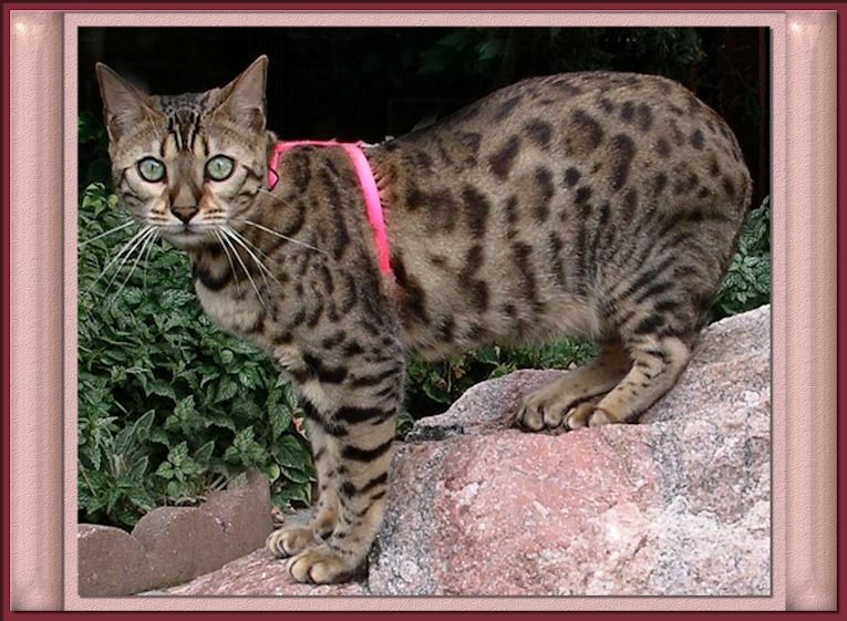 Pin On Here Kitty Kitty