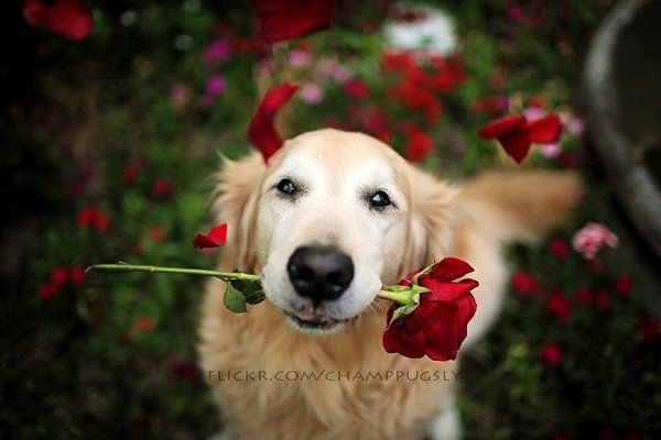 50 Lovely Puppy Pictures Puppy Pictures Dog Love Cute Dogs