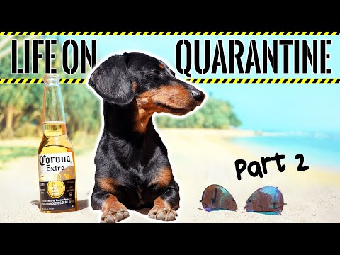 Pin on Crusoe the Celebrity Dachshund