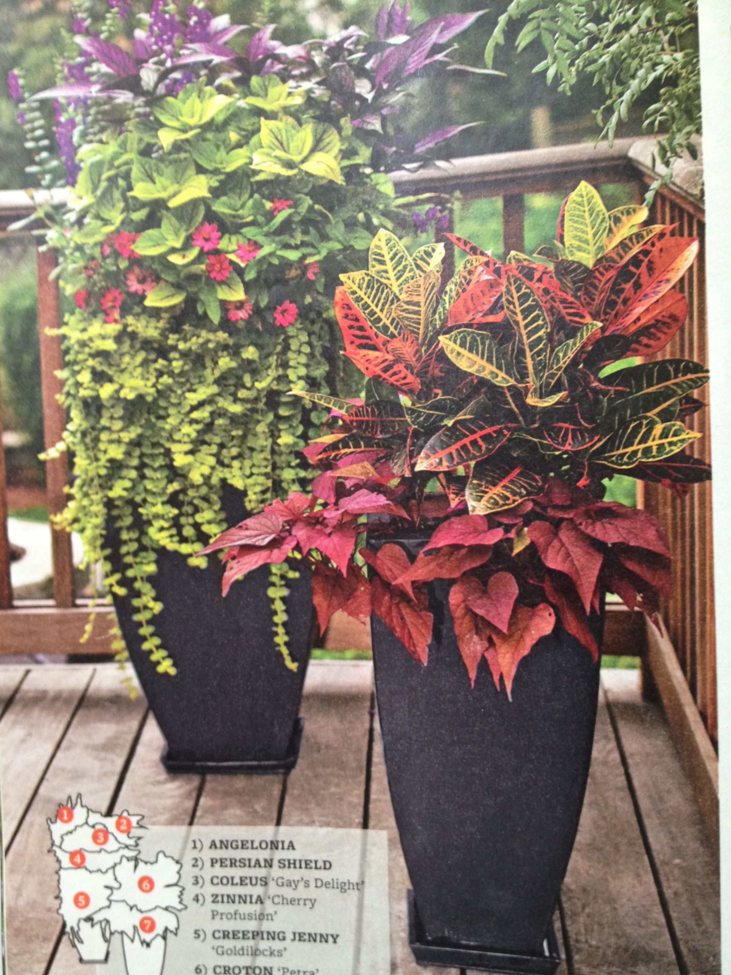 Potted plants for patio coleus zinnia angelonia croton