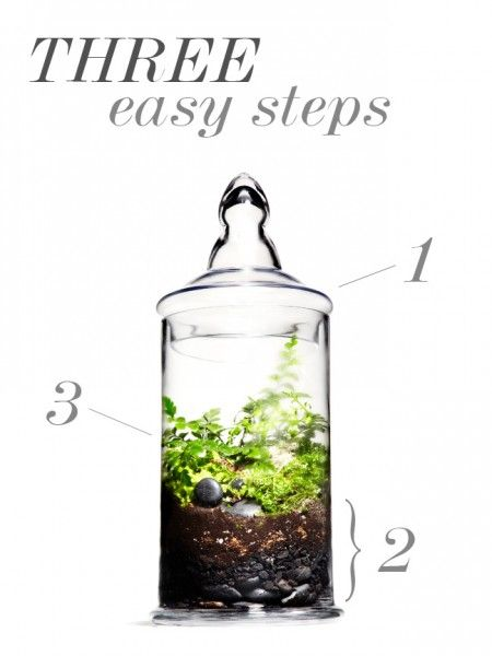 comment faire un terrarium plants at home pinterest terraria gardens and plants. Black Bedroom Furniture Sets. Home Design Ideas