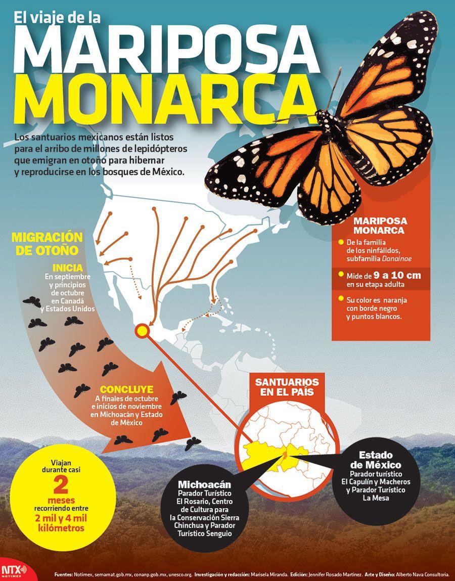 Cada año millones de mariposas monarca viajan desde Canadá y EU ...