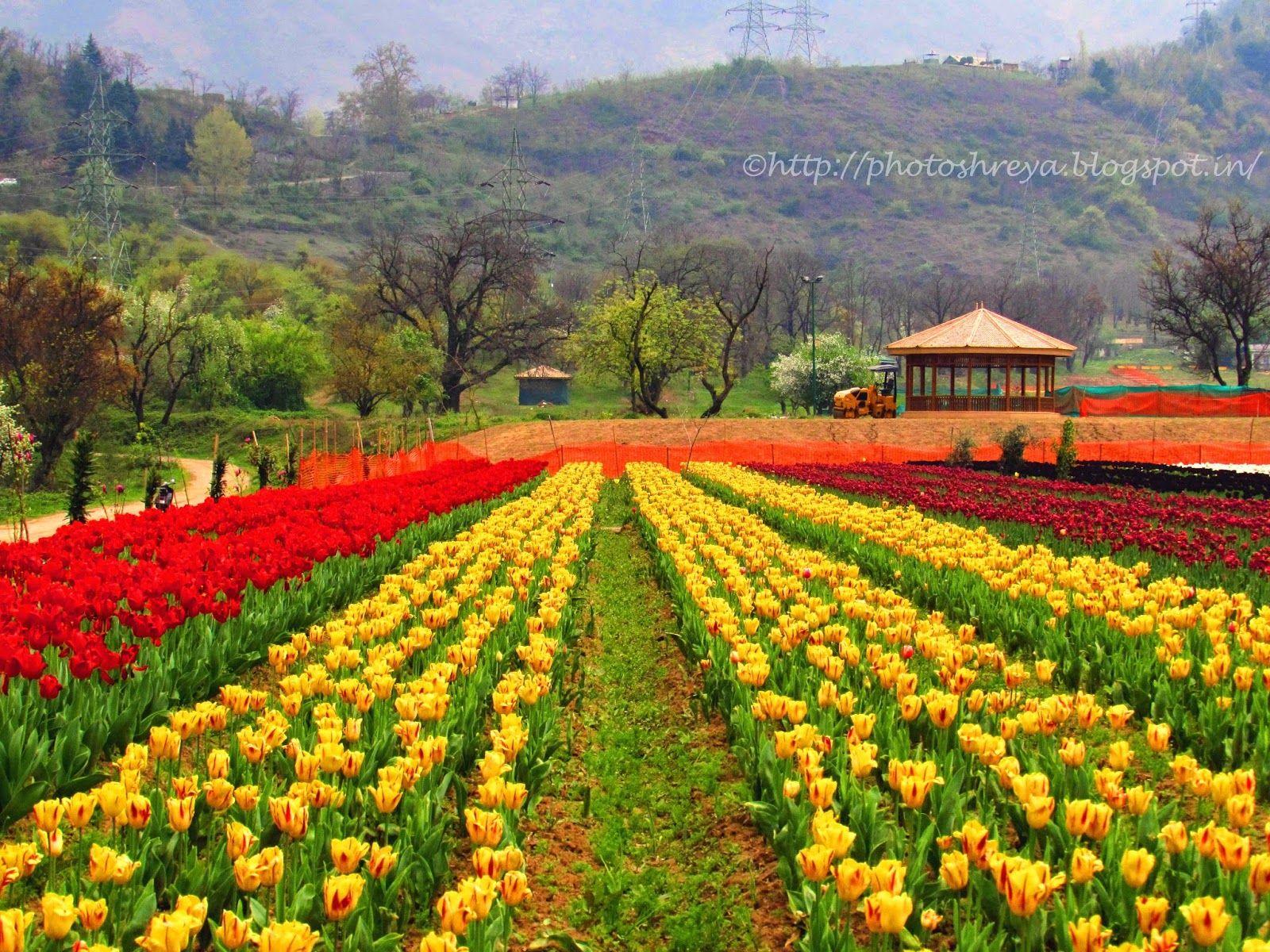 41 Foto Foto Bunga Indah Bunga Taman Bunga Sketsa Bunga