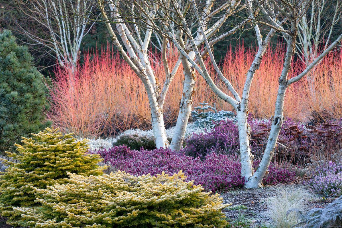 Garden Design Get Your First Issue For Free Kevin Lee Jacobs Winter Garden Garden Design Magazine Winter Plants