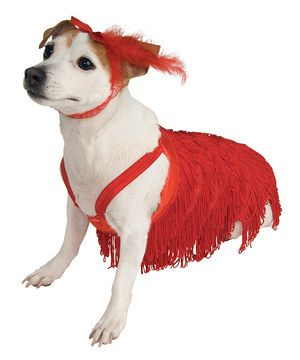 Dress Those Pets Up For A Bit Of Silly Fun This Getup Is Designed