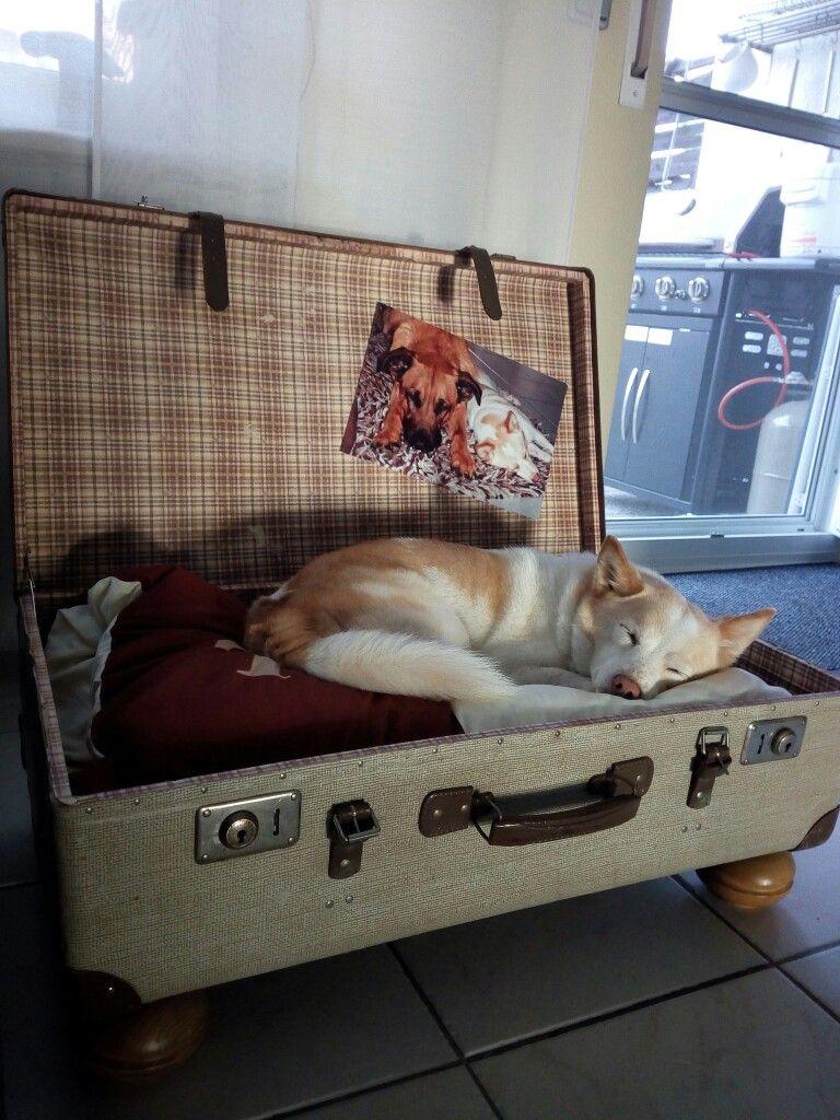 koffer hundebett paletten schilder basteln pinterest koffer hundebetten hundebett und. Black Bedroom Furniture Sets. Home Design Ideas