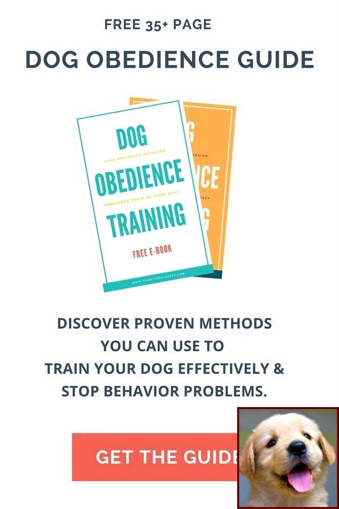 Dog Behavior Research Paper And Clicker Training In Dogs
