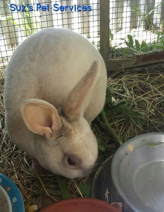Meet Chino - http://ift.tt/1HQJd81