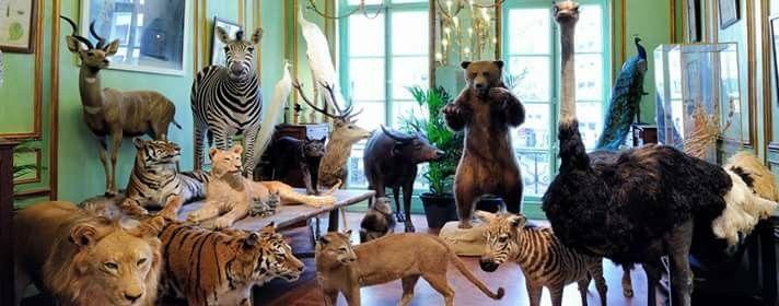 Deyrolle Musée Taxidermie