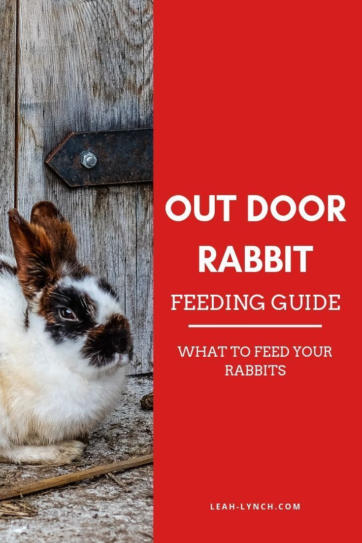 What To Feed A Rabbit  Beginners Guide - Rabbit feeding, Pets, Rabbit, Show rabbits, Pet rabbit, Pet health - Wondering what to feed a rabbit  This guide will give you practical rabbit feeding and care tips to raise rabbits as pets, on your farm or homestead