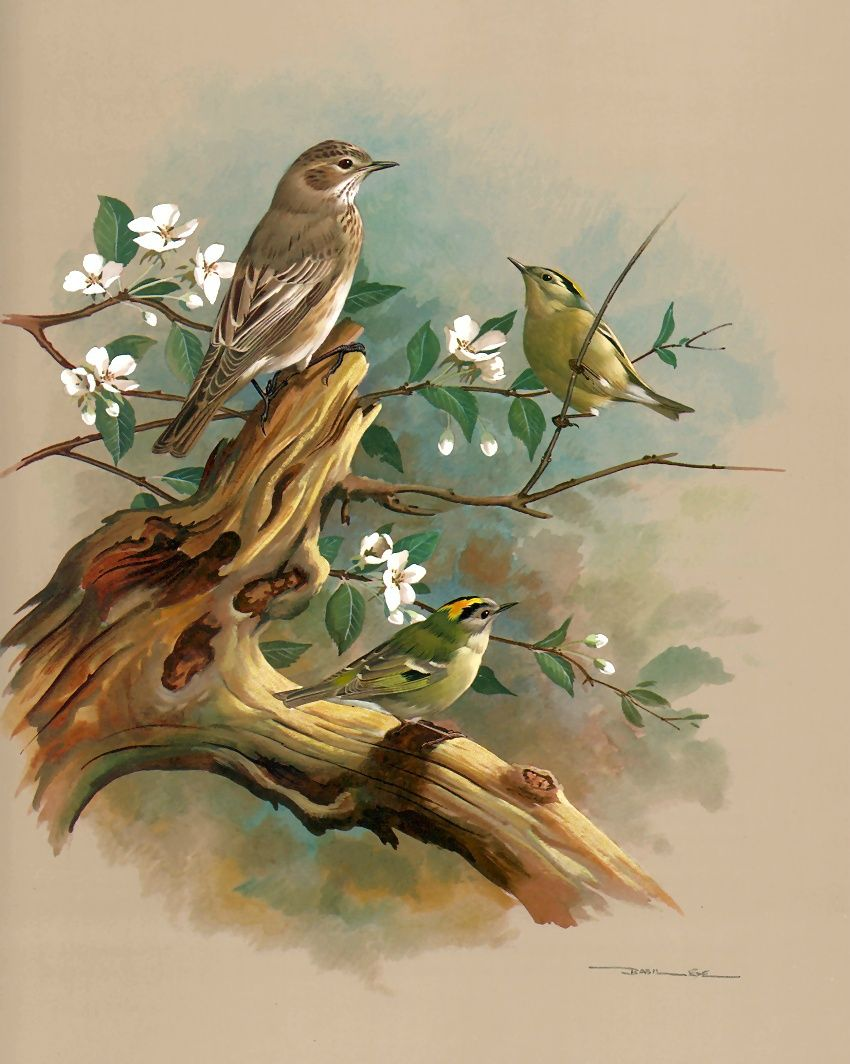открытки лесные птицы