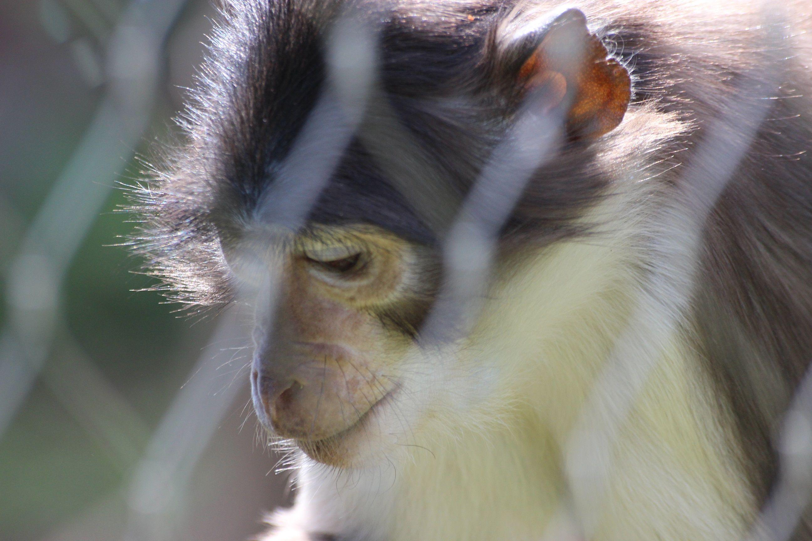Aquariums Animal Charities Zoo Animal Advocacy