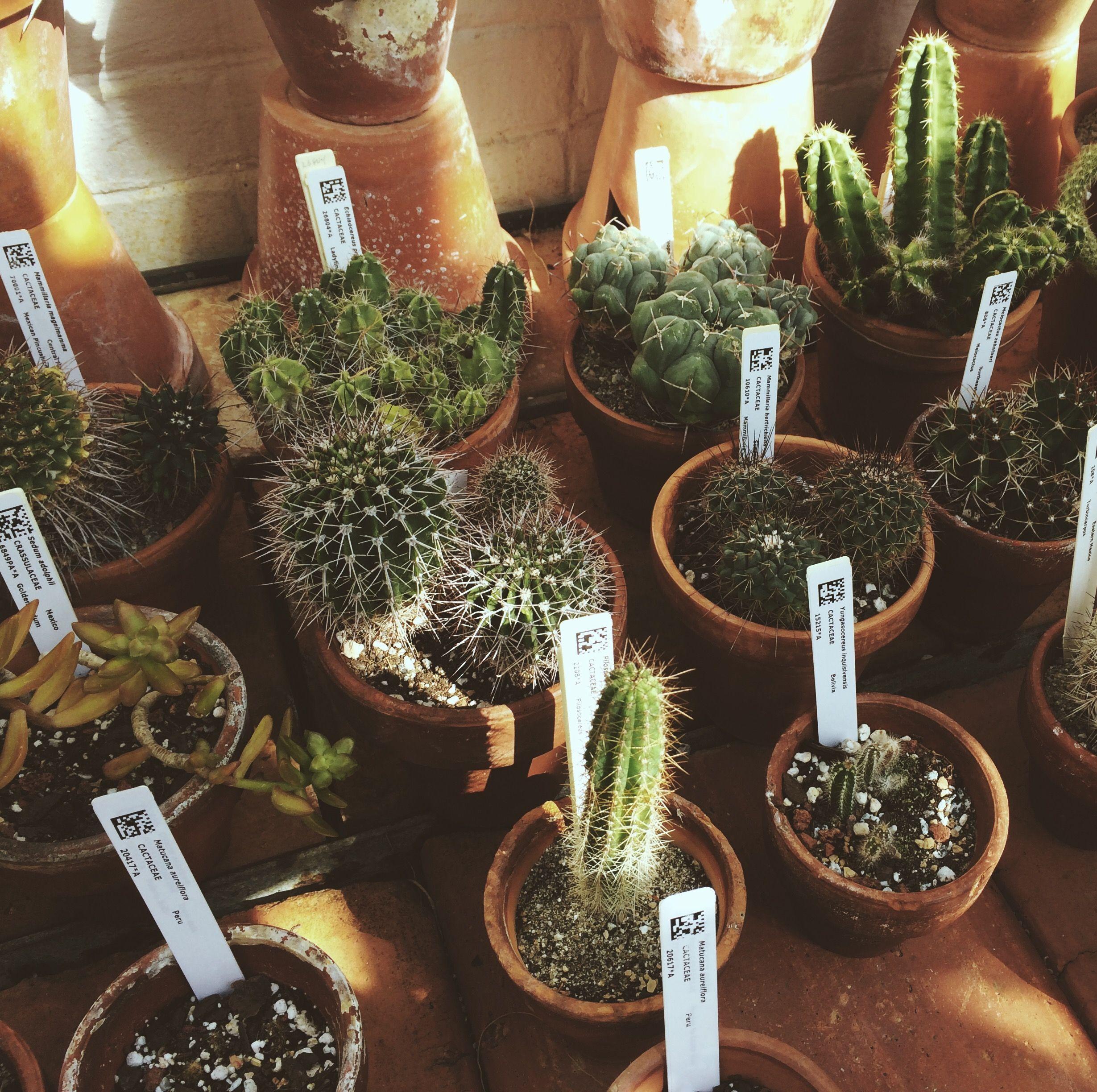 sarlukowski :) | plants. | Pinterest | Plants, Cacti and Flowers
