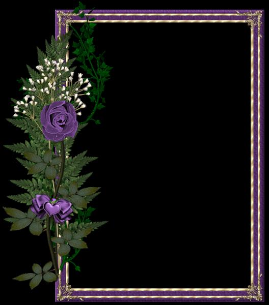 Beautiful Transparent Purple Photo Frame With Purple Rose Rose Frame Floral Background Flower Frame