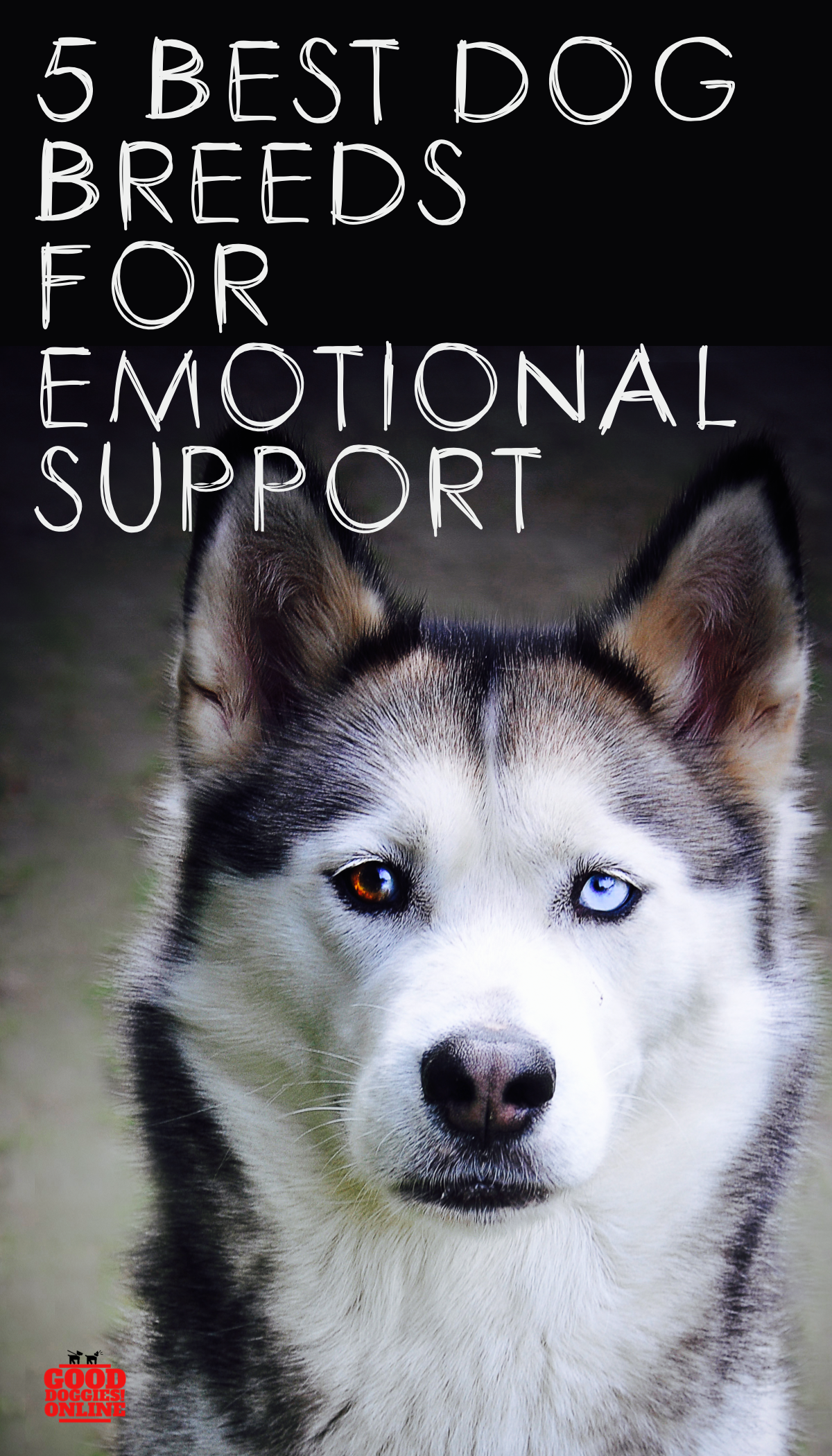 5 Best Dogs for Emotional Support Best dog breeds, Best