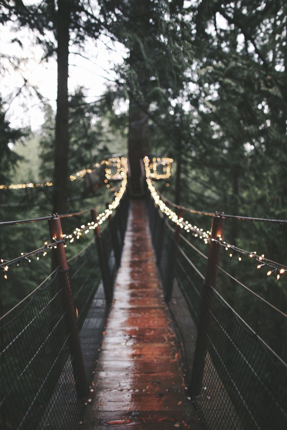 Moody Nature — wcanvas Forest Lights by Ryan Wilson