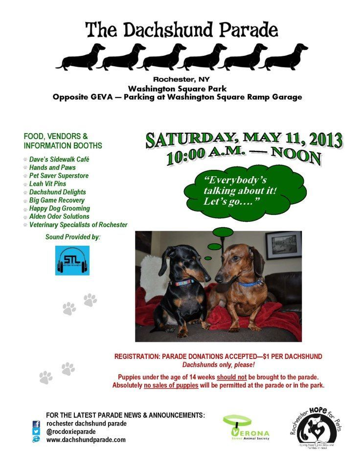 This Is In Rochester Ny Best Doxie Gathering I Ve Ever Been Too