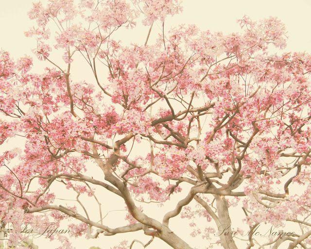 Drawworm Is Drawing Sakura Cherry Blossom Painting Art Sale Artwork