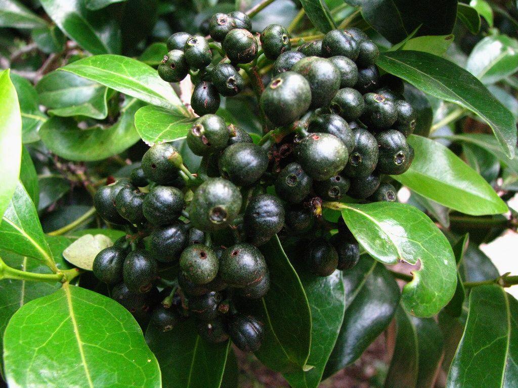 Alaheue endemic pinterest