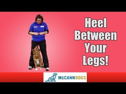 Axiak9 How To Teach Your Dog To Heel Between Your Legs
