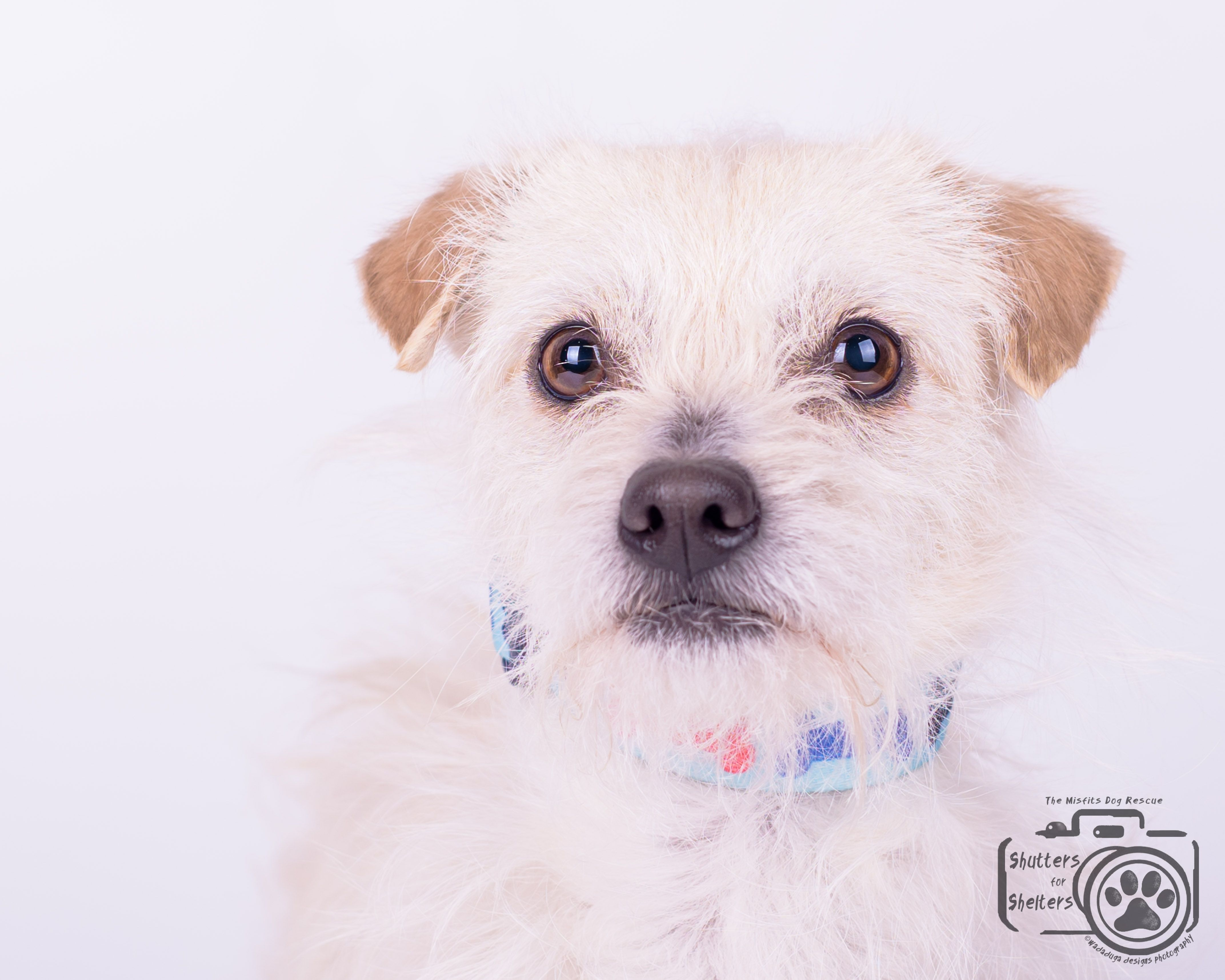 Toxirn Dog For Adoption In Colorado Springs Co Adn 529477 On Puppyfinder Com Gender Male Age Young With Images Dog Adoption