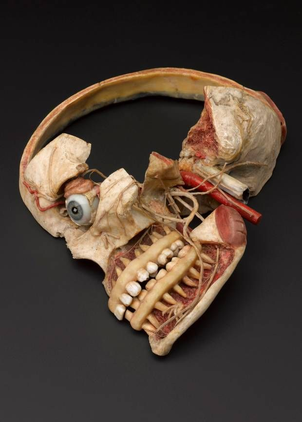 Museum of London head inspired \'to leave body to medical science\' by ...