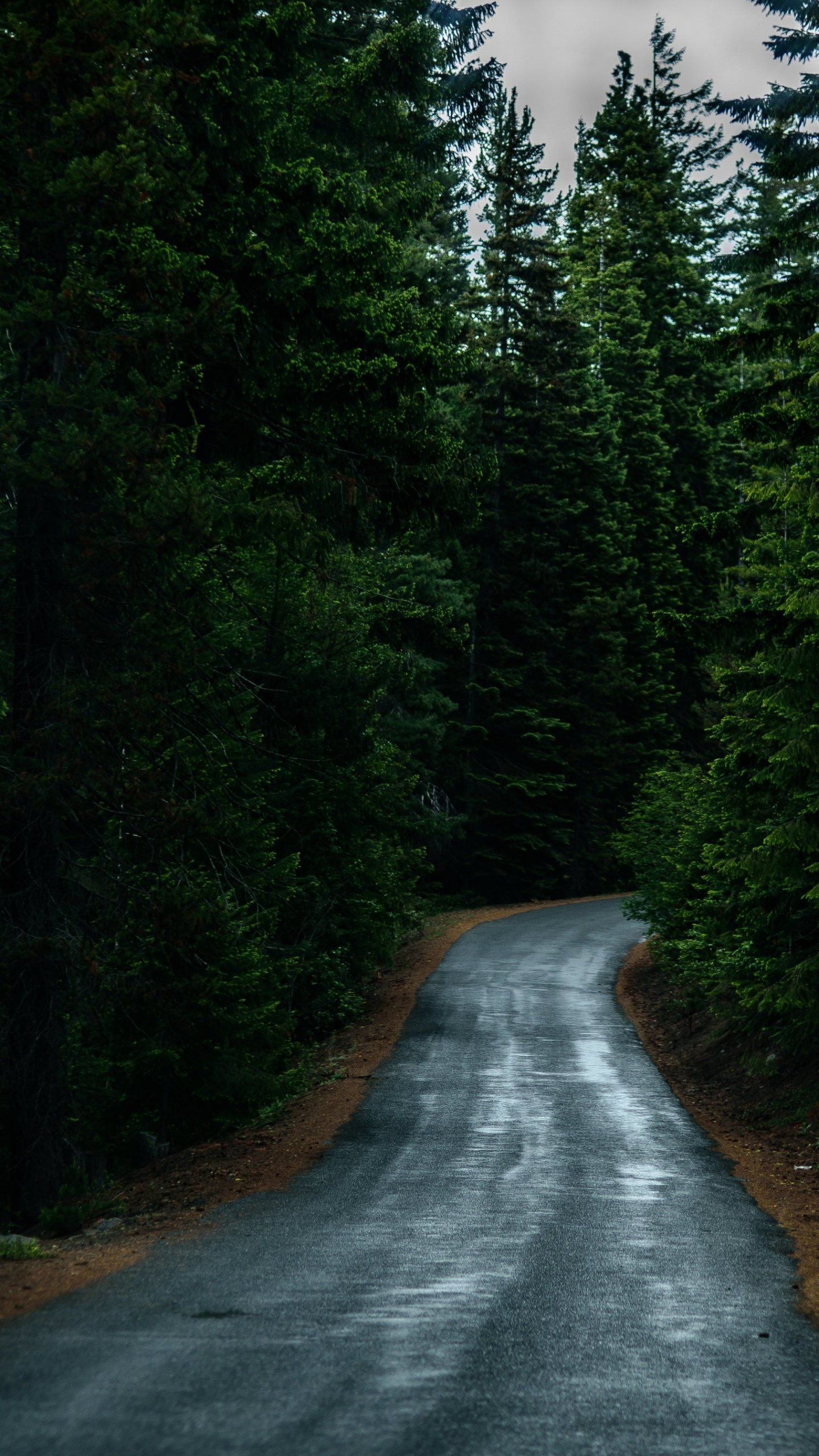 Road Through Forest Wallpaper iPhone, Android & Desktop