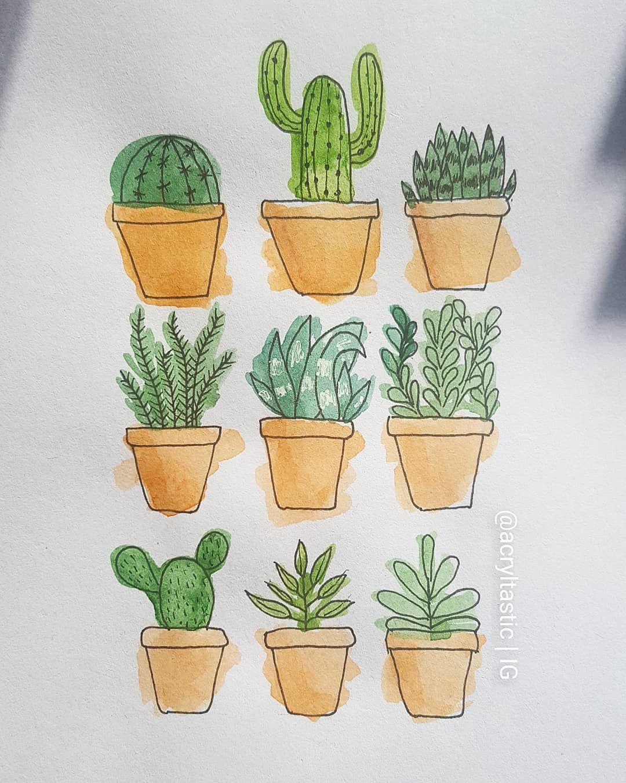 Cactus & Sukkulenten