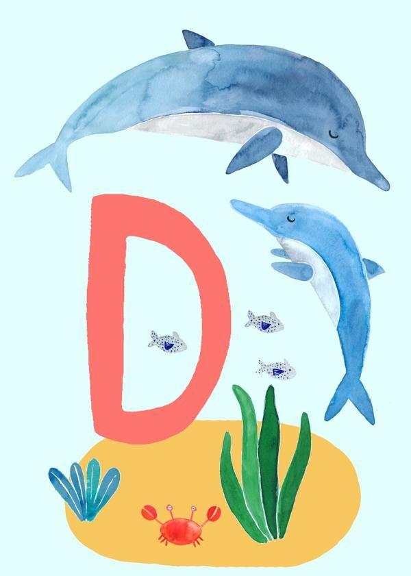 abc karte d wie delphin  abc abc poster bildkarten