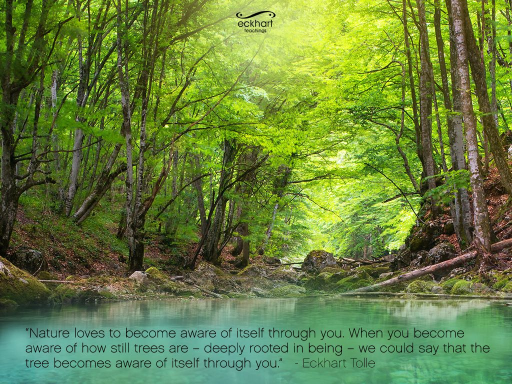 Eckhart Tolle forest wall paper for your desktop. Forest
