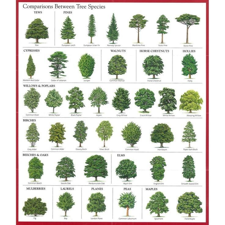 Learn How To Identify Trees And Leaves - Enchanted
