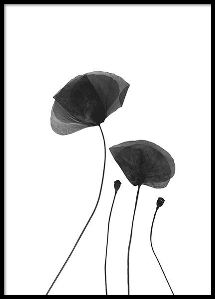 17 95 fo 12x16 black poppy flowers poster in the group posters prints black