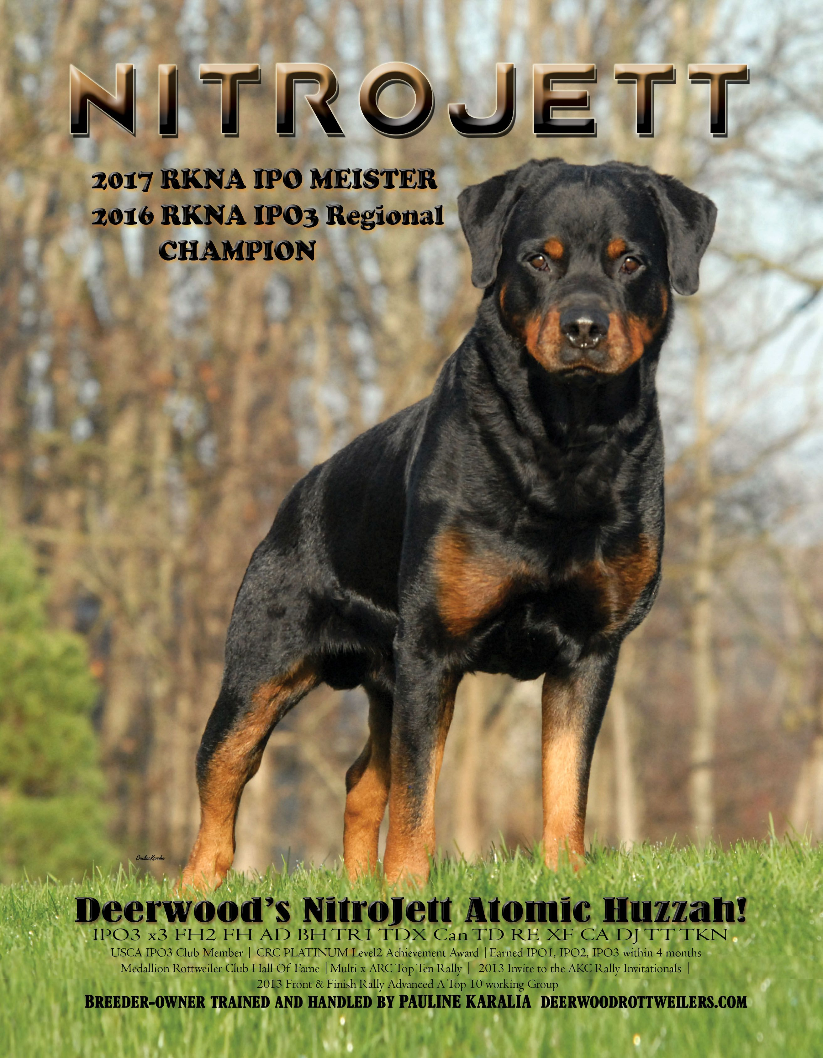 Pin By Patty On 1 Rottie In 2020 Rottweiler Rottie Breeders