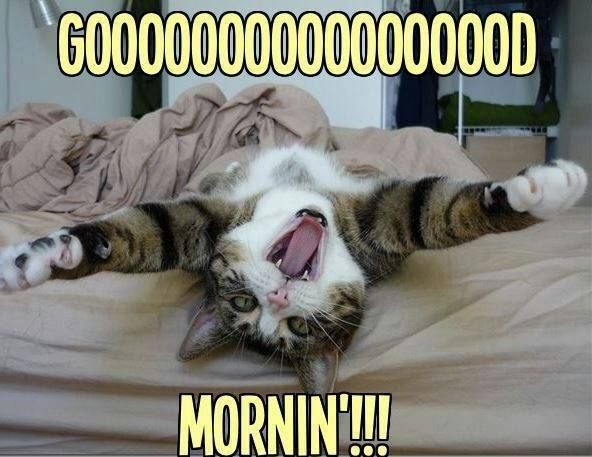 Bom Dia Cat: Mi Hermoso Retrato