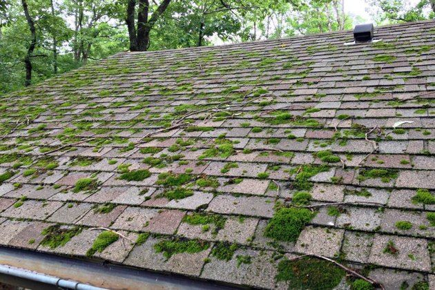 Rid Your Roof Of Moss Cleaning Roof Deck Moss Removal