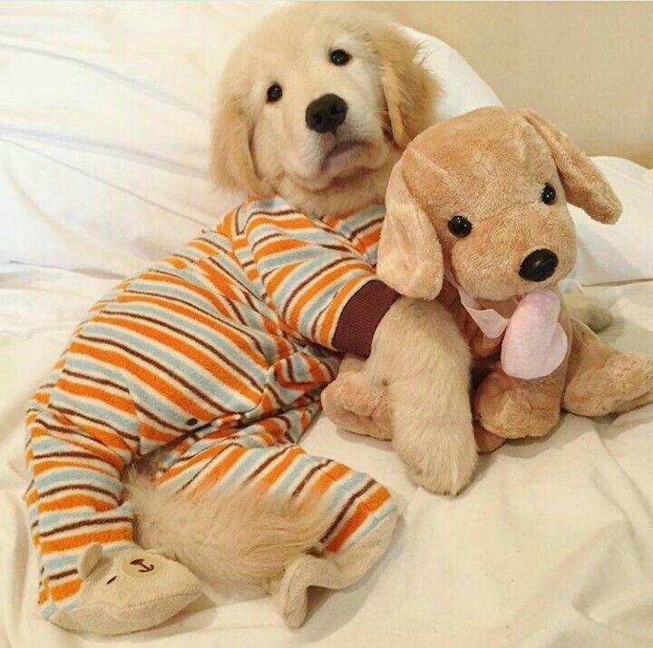Cute Animals Image By Megha Banerjee On Golden Retrievers Cute