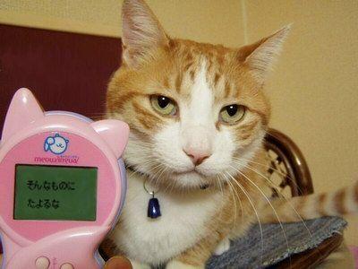 【画像あり】変な猫画像が勝手に集まるスレwwwwwwwwwww : 暇人\(^o^)/速報 - ライブドアブログ