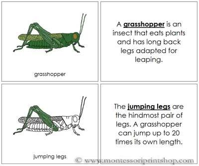 Grasshopper Nomenclature Book: illustrates and describes 13 Parts of the Grasshopper.