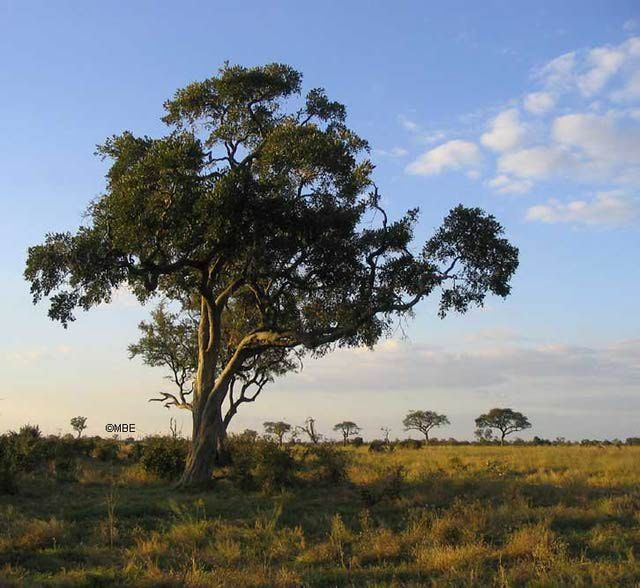 Reference Photos for Artists: Trees | Favorite Places ...