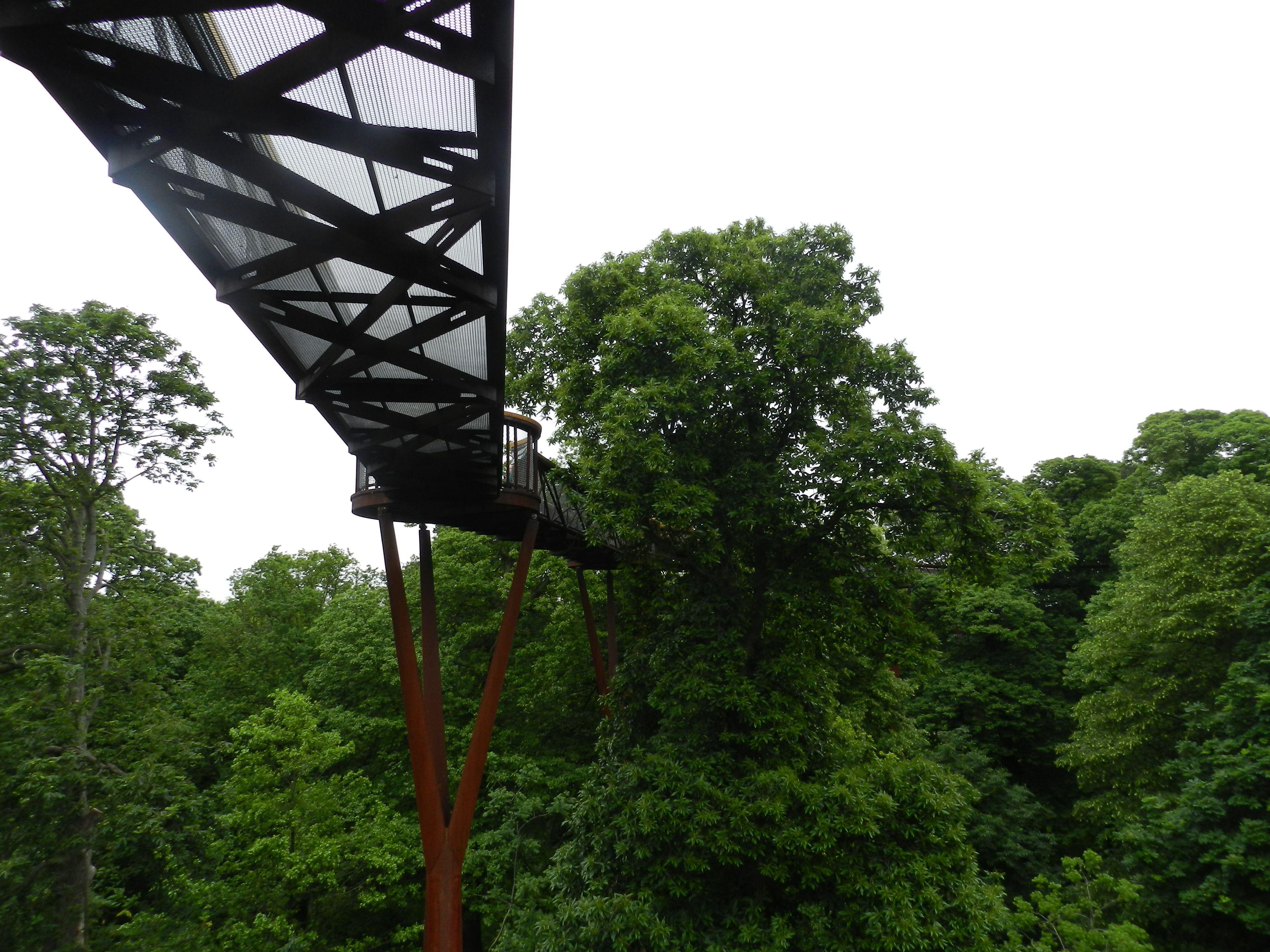 c03907799a6bb369066a36d591654b39 - How High Is The Tree Top Walk At Kew Gardens