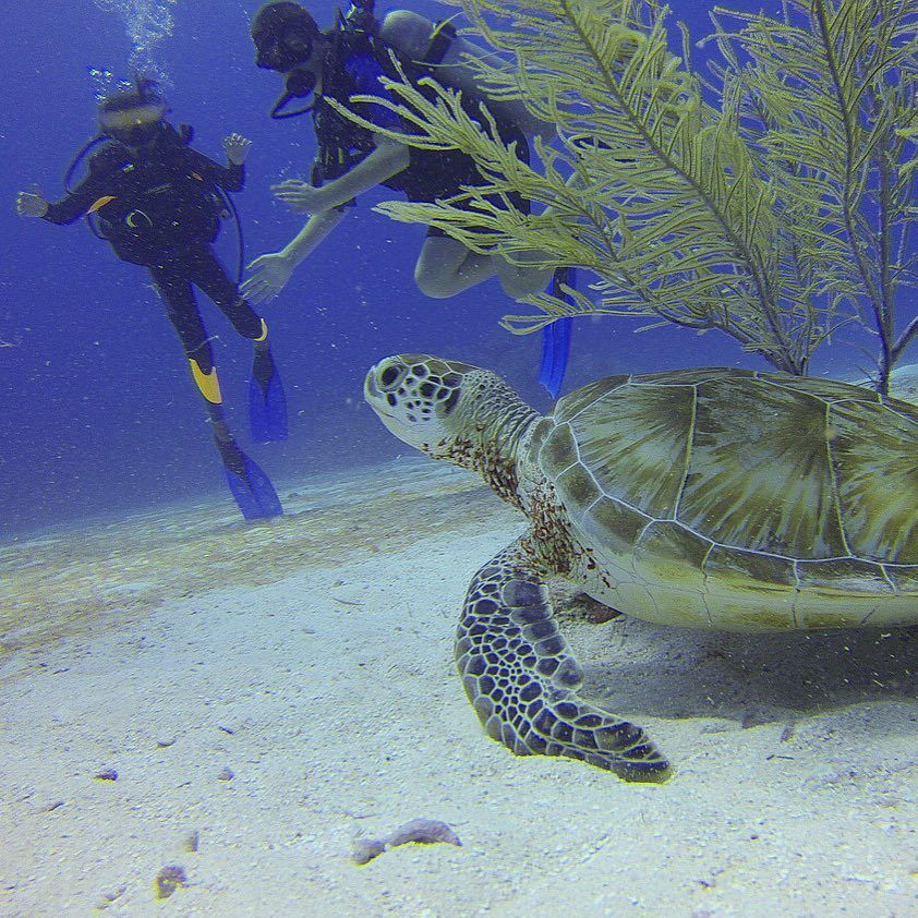 We love sea turtles around here, so scuba diving with them in #Mexico is kinda like the best thing ever!