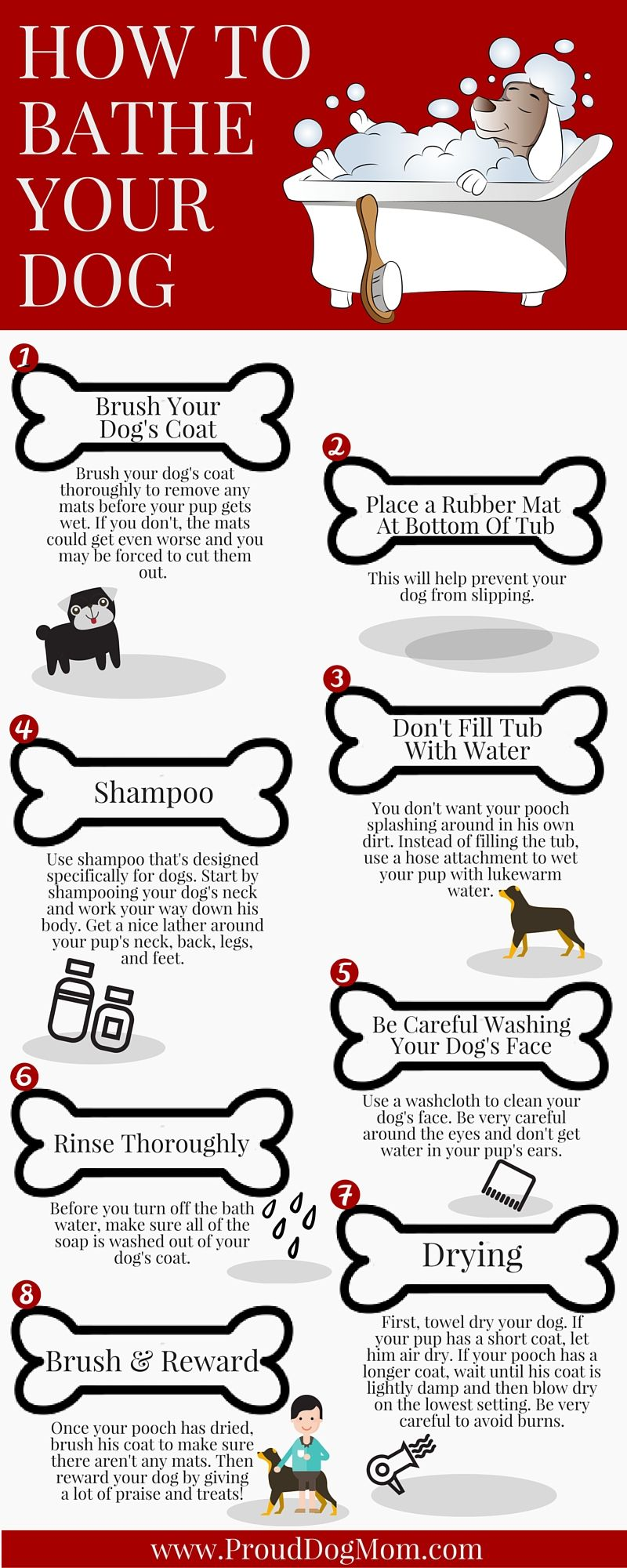How To Bathe Your Dog In 8 Steps Infographic