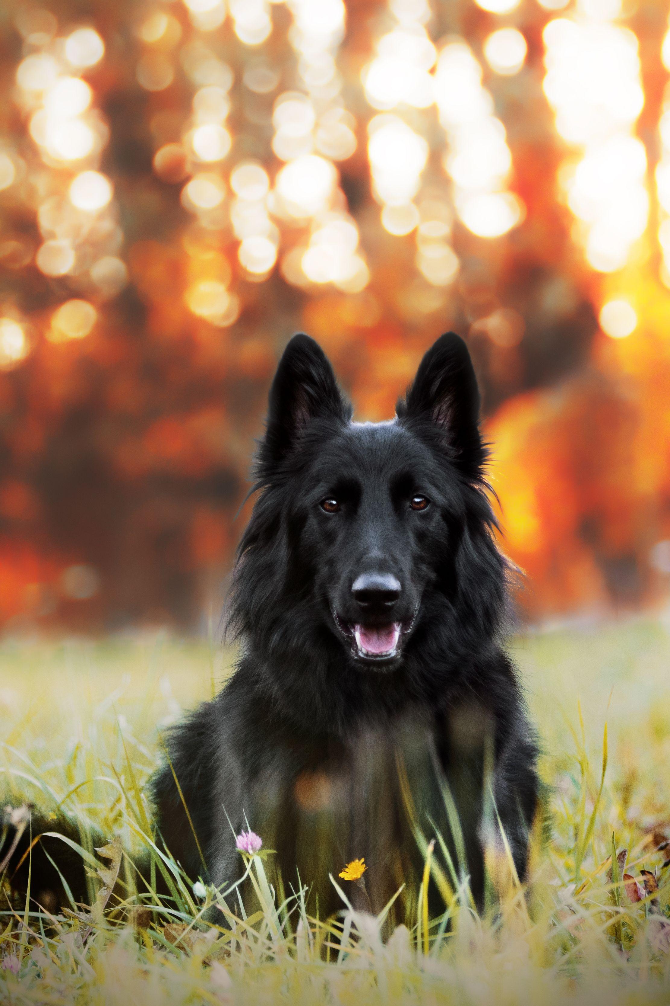 Tierfotograf Finden Preise Vergleichen In 2020 Tierfotografie Hunde Fotos Hundefotos
