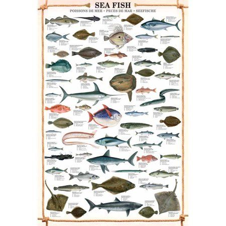 Sea Fish Educational Chart - Walmart.com