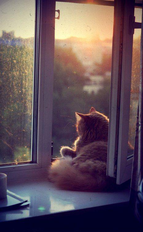 . #kittycats