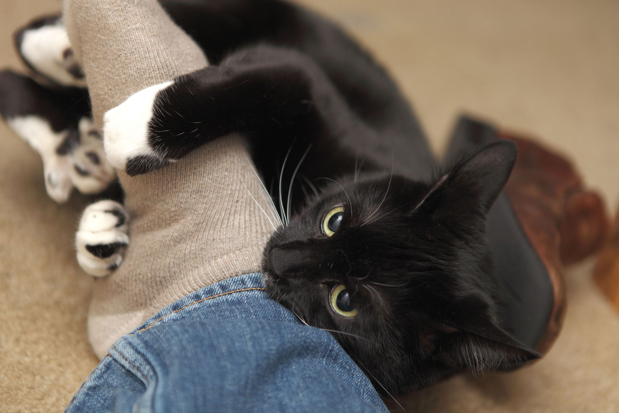 From Nail Biting To That Crazy Chatter We Re Pulling Back The Curtain On Strange Things Cats Do Cat Biting Cat Behavior Cat Language